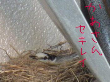 7.17.4.RIMG4211.jpg